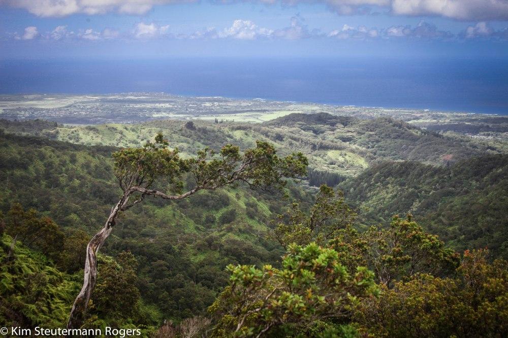 View of Poipu Coastline from Mauka Kalaheo