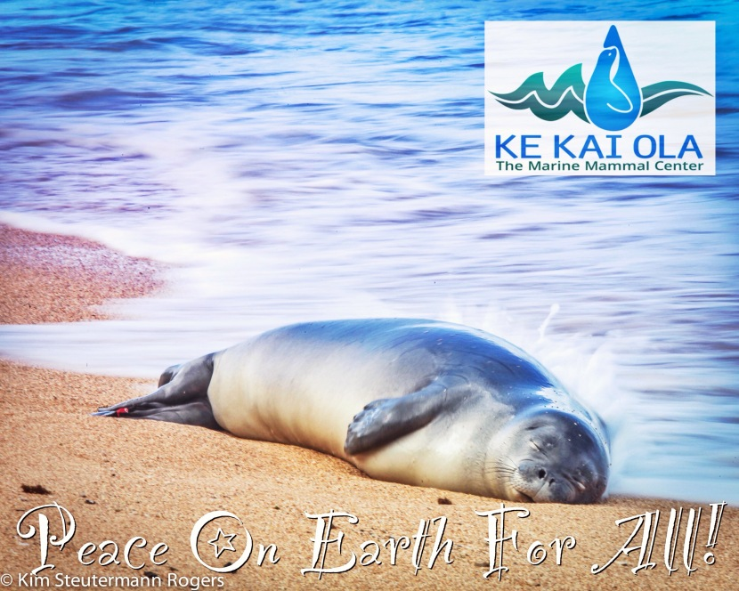 Help Save Hawaiian Monk Seals.