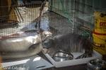 Hawaiian monk seals Pearl and Hermes on board shower