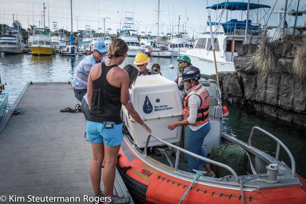 The Seal Off-Load at Kona