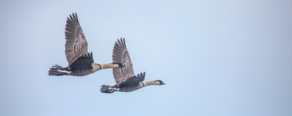 nene-pair-in-air-triptych-metal